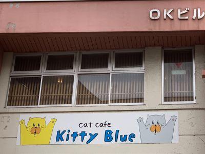 Cat cafe Kitty Blue