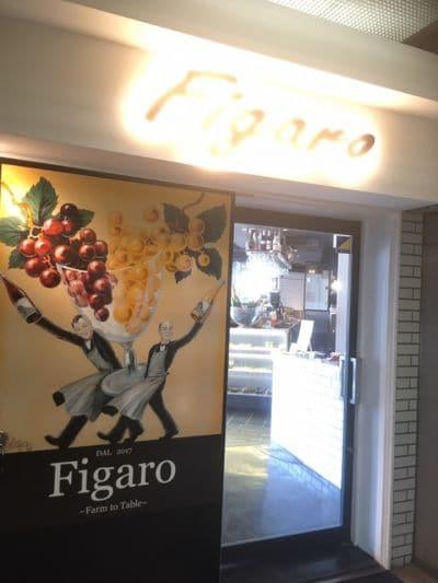 イタリアンスパニッシュ フィガロ (Figaro)