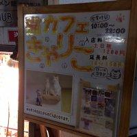 猫カフェ きゃりこ 吉祥寺店